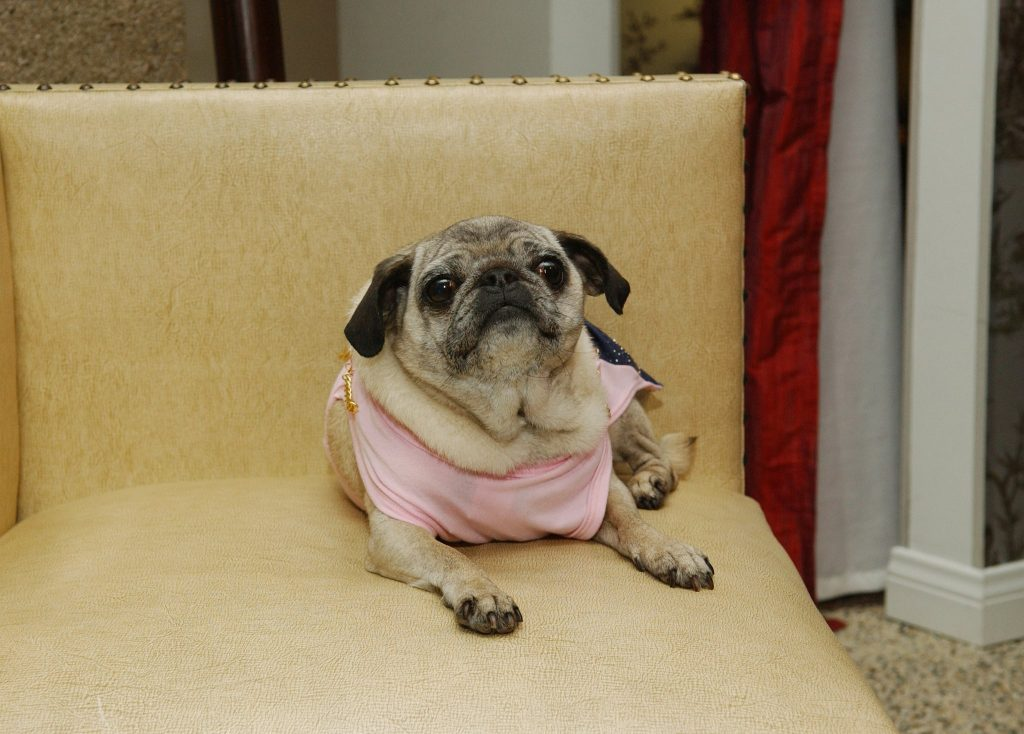 Missing-Mimi-LaRue-Tori-Spelling-Beloved-Pug-Dies